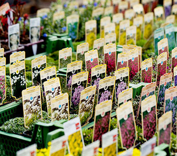 Die richtige Pflanzzeit für Blumen