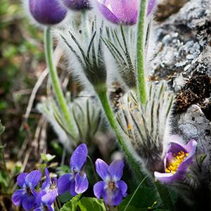 Frühlingsblumen anpflanzen